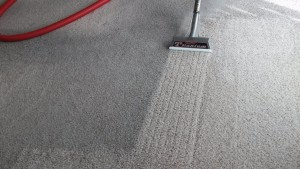 Carpet Cleaning Service in Islip Terrace